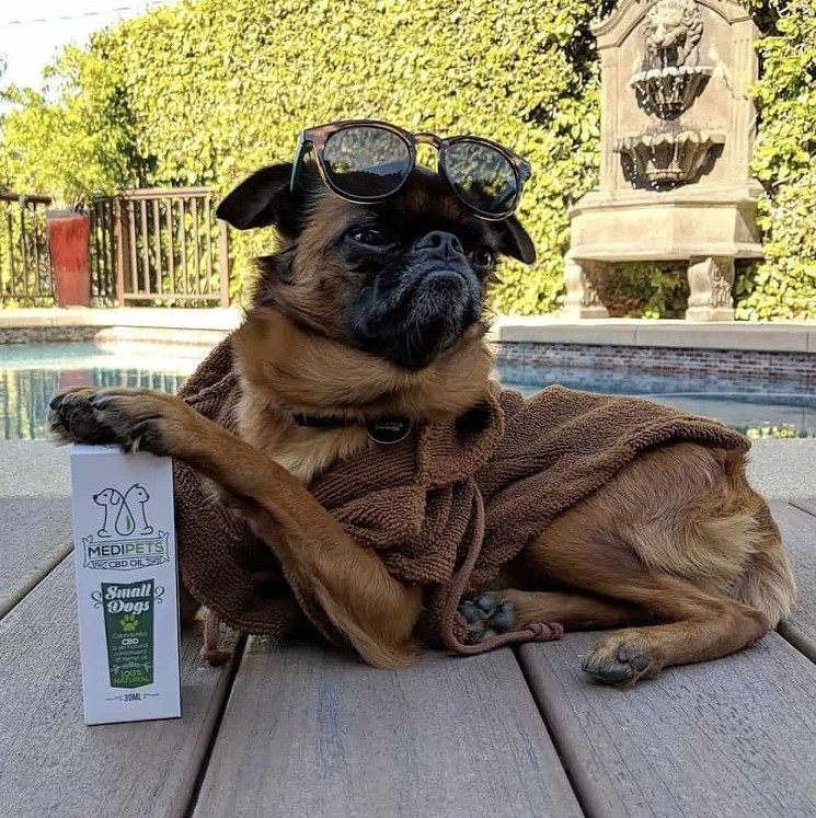 CBD Oil Can Benefit Man's Best Friend, Too