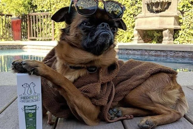 CBD Oil Can Benefit Man's Best Friend, Too – L.A. Weekly